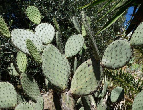 Le Jardin tropical ou aride