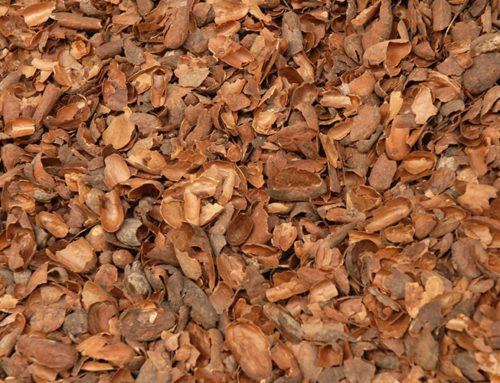 Les coques ou cosses de cacao