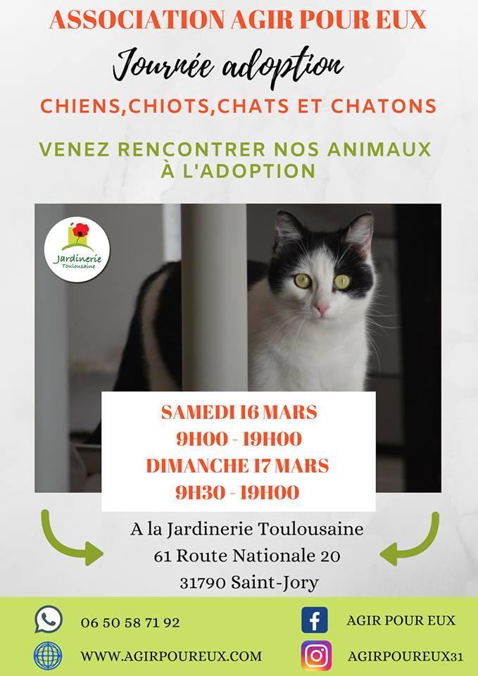 Le 16 Et 17 Mars Journees Adoption Chiens Chiots Chats Et Chatons Jardinerie Toulousaine